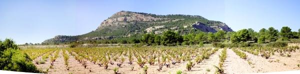 Bodegas Castaña vineyard