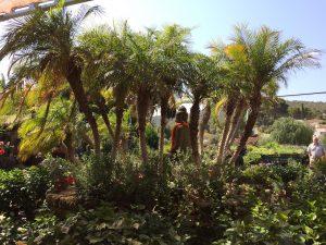Gardening_MontgoVerd